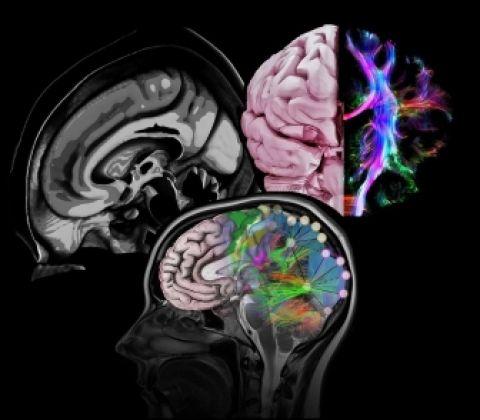 Bağımlılık Psikolojisi